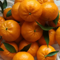 Mandarino tardivo di Ciaculli-img-4