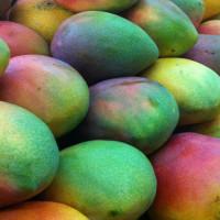 Mango-img-15
