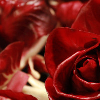 Rosa di Gorizia-img-5