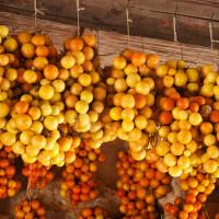 Pomodoro giallo del piennolo